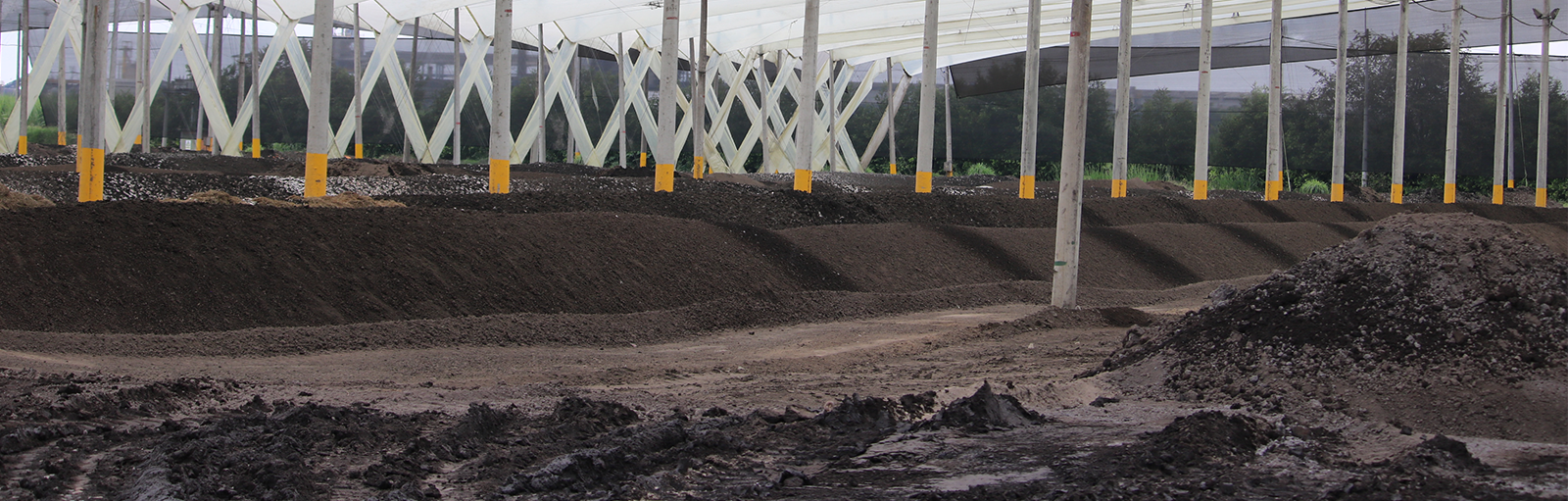 Control of odours in sludges: Compost Processing Plant in Ingenio Del Cauca